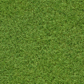 芝生風のフリーテクスチャ素材のサムネイル画像